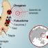 Trabalhadores em 'missão suicida' no Japão, ganham R$2.000 por dia em usinas nucleares