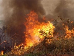 queimada-mato-grosso
