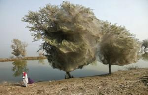 teias-de-aranha-paquistao