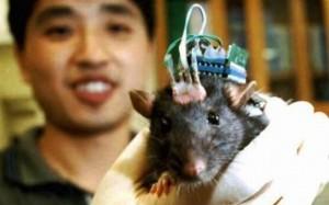 implante-cerebro-testado-em-ratos