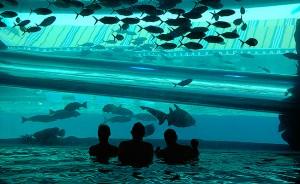 piscina-com-tubaroes-e-arraias