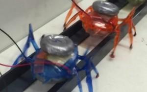 Pesquisadores criam robôs-formiga capazes de puxar um carro
