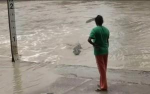 Mulher enxota crocodilo ameaçador batendo chinelo na Austrália