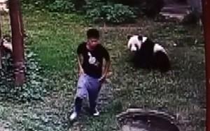 Panda gigante agarra chinês que invadiu jaula para impressionar mulheres