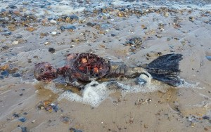 Imagens de suposta sereia encontrada em praia intriga internautas