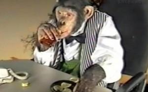 Macaco fumante que trabalhava em cassino morre aos 24 anos