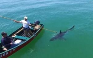 Imagem mostra momento tenso em que pescadores são cercados por tubarão branco