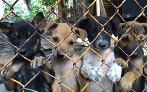 Coreia do Sul fecha maior mercado de carne de cachorro antes de Jogos de Inverno