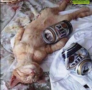 gato-bebado