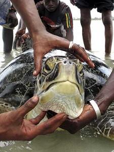 tartarugas-gigantes